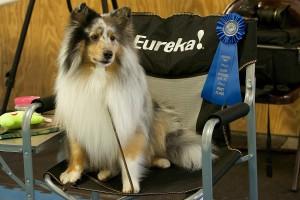 Schenectady Dog Training Club, Inc.